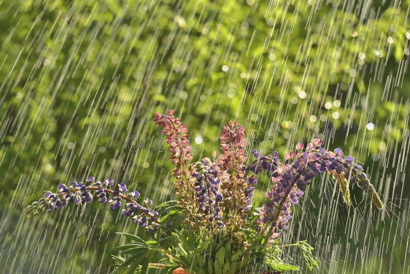 Pioggia e fiori di estate fotografia stock libera da diritti