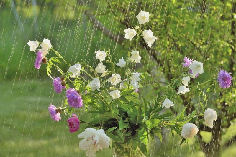 Pioggia e fiori di estate fotografia stock