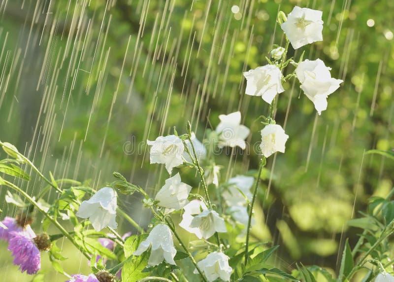 Pioggia e fiori di estate immagini stock libere da diritti