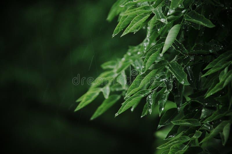Pioggia E Foglie Fotografia Stock