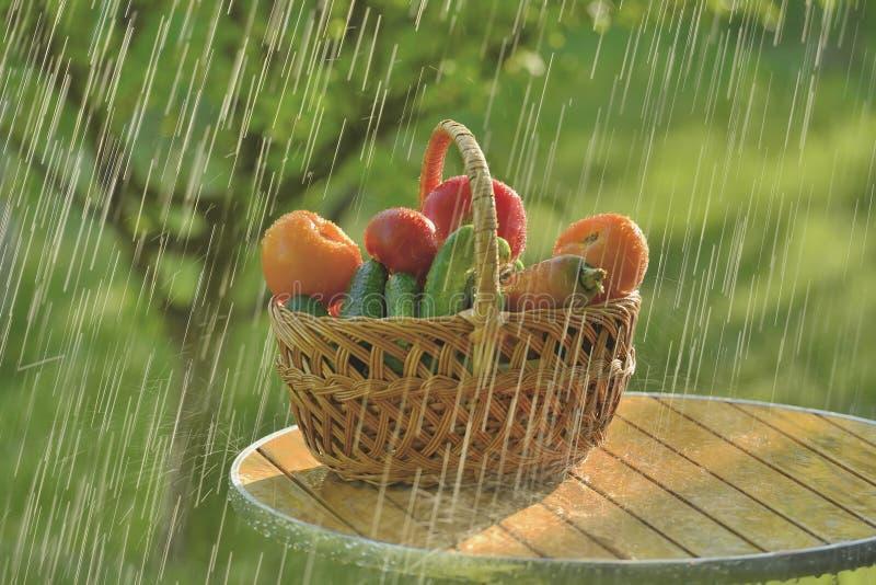 Pioggia e verdure di estate fotografie stock