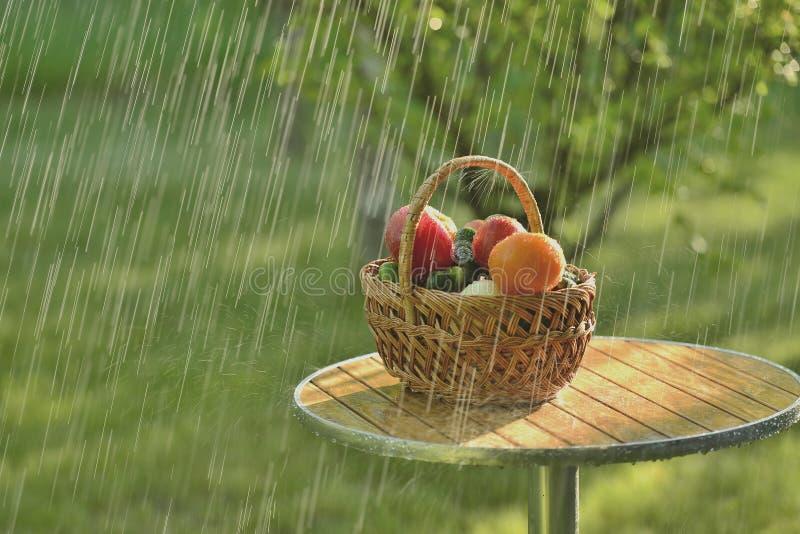 Pioggia e verdure di estate fotografia stock
