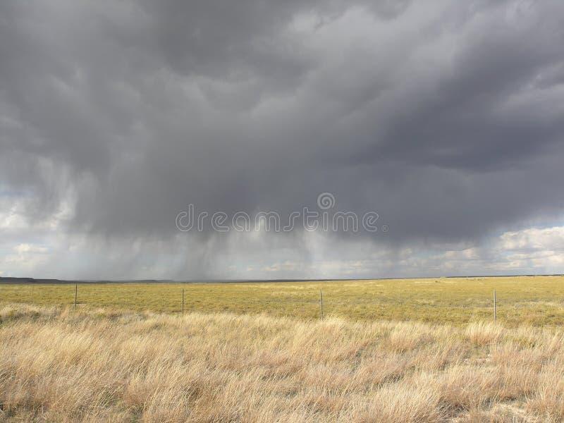 Pioggia grigia sul campo dorato fotografie stock