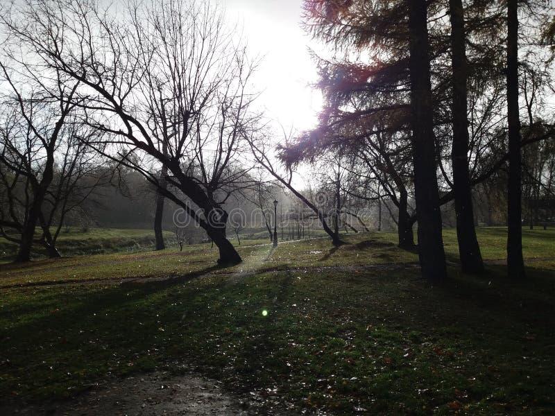 Pioggia nel parco fotografie stock