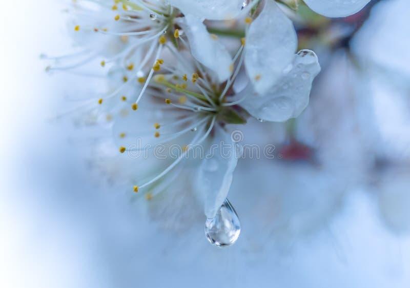 Pioggia perfetta fotografie stock