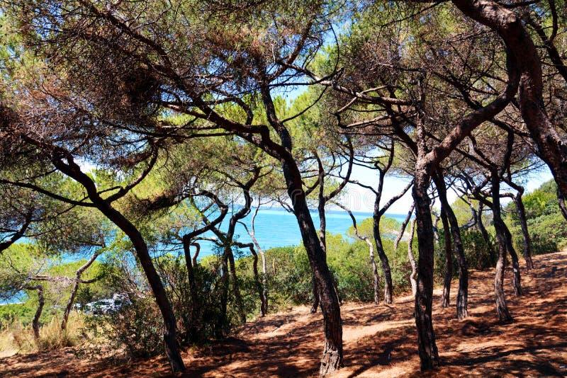 Piombino, Salivoli, Livorno, schöner Wald und tyrrhenisches Meer stockfotografie