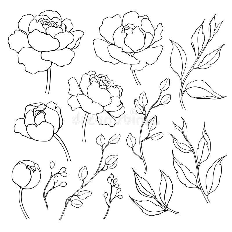Pionblomma och sidalinje teckning Dragen översikt för vektor hand stock illustrationer