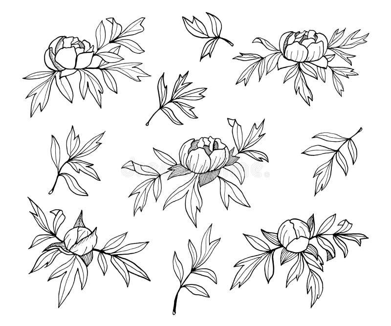 Pionblommor, knoppar och sidor fodrar den monokromma illustrationen Uppsättning för utdragen översikt för hand blom- Enkelt svart royaltyfri illustrationer