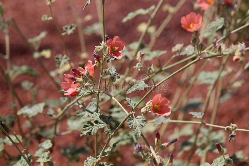 Pioneer Park Flowers stock images