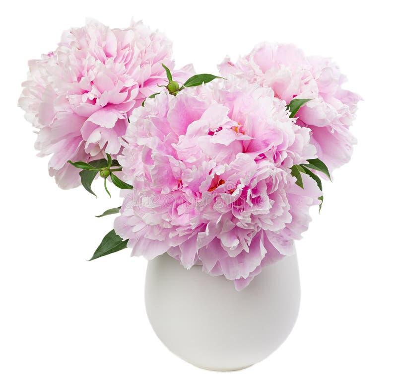 Pionen blommar i den vita vasen arkivbild