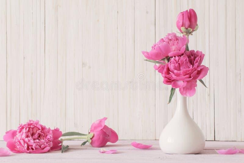 Pionen blommar på vit bakgrund arkivfoto