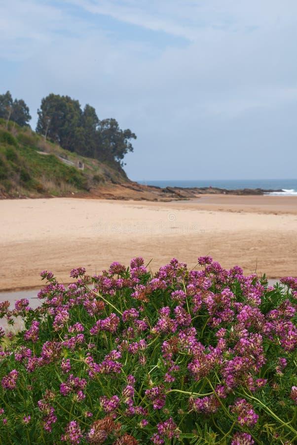 Pionowo krajobraz plaża i faleza z ostrości z dzikimi menchiami kwitnie zdjęcie stock