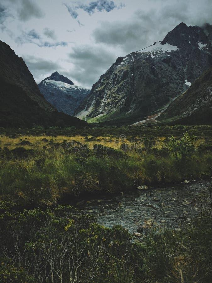 Pionowo strzał żółtej i zielonej trawy pole na wietrznym dniu blisko gór obrazy stock