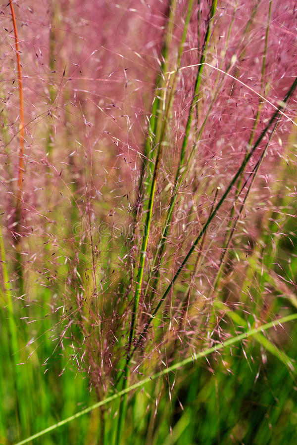 Pionowo tła trawy Ornamentacyjni kolce zdjęcie royalty free