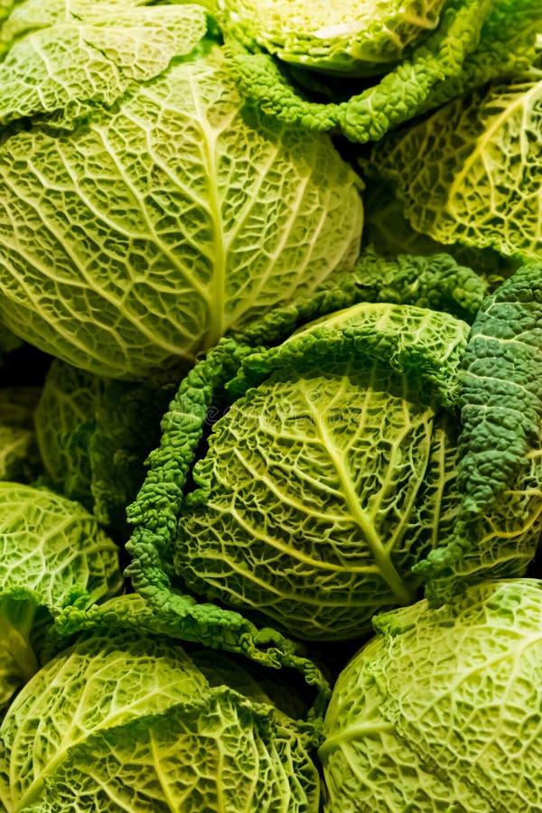 Pionowo tło kierowniczej kapusty savoy wzoru warzywa zieleni świeżych naturalnych liści jesieni podstawowy średniorolny wzór fotografia stock