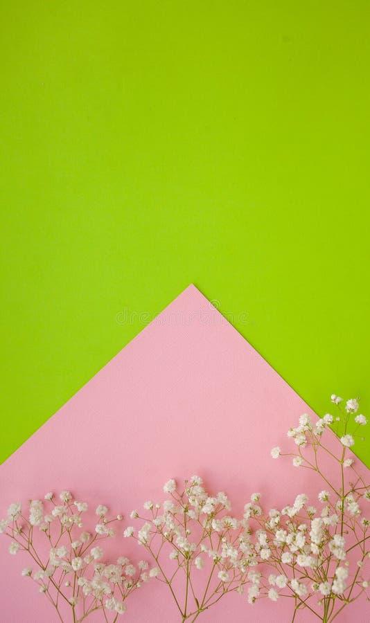 Pionowo wiosny minimalistic tło z delikatną białych kwiatów łyszczec na greenand menchii tle obraz royalty free