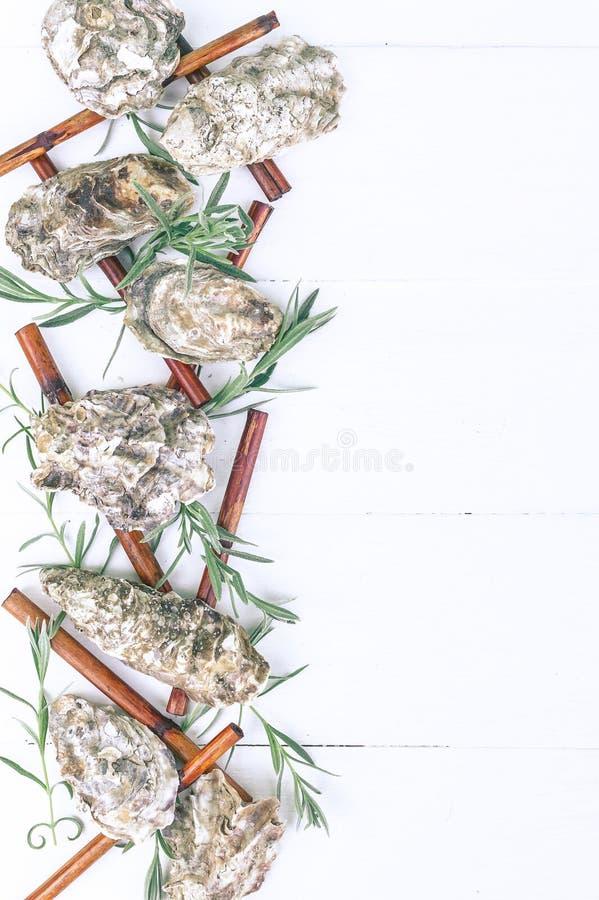 Pionowo zdroju sztandar Ostrygowe skorupy, denni otoczaki, suchy bambus, potomstwa kiełkują na drewnianym białym tle obraz stock