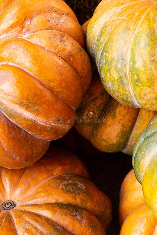 Pionowy zestaw wielu pomarańczowych dyni miniżebrowanych jesienią zwiewanych podstaw tła zdjęcia royalty free