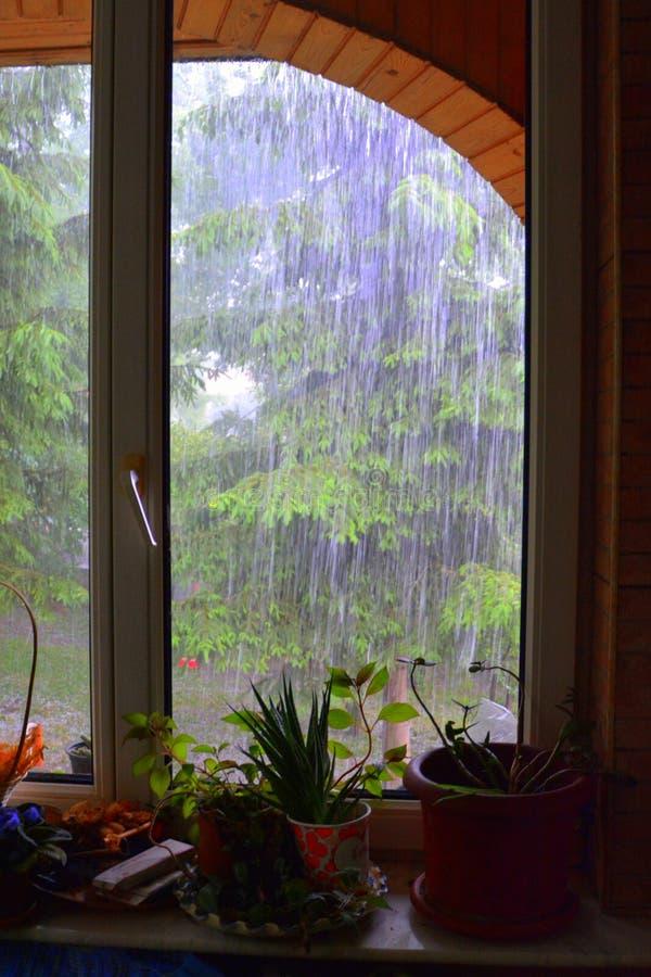 Piova nel giardino di estate in un giorno piovoso fotografia stock