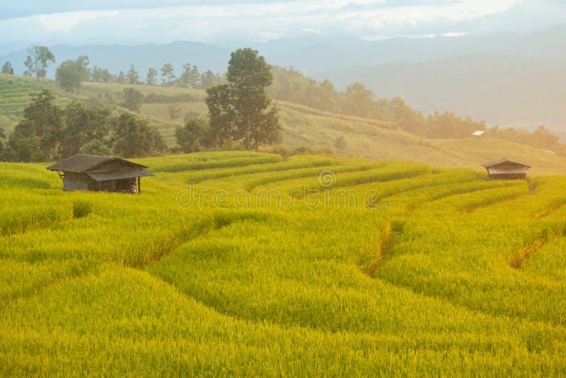 Piovendo il riso a terrazze sistemi in Chiang Mai, Tailandia Il tramonto scen immagini stock libere da diritti
