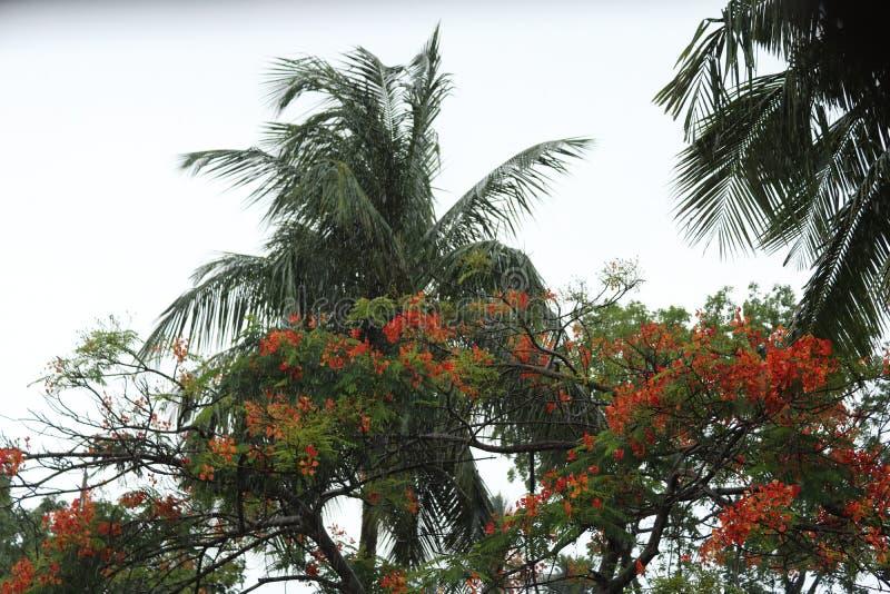 Piovendo sopra gli alberi fotografia stock