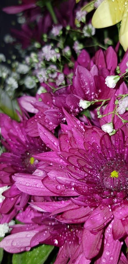 Piovuto appena sopra fotografie stock libere da diritti