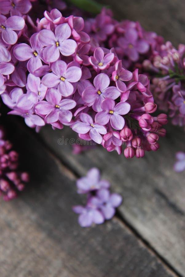 Piovuto appena sopra Il lillà porpora fiorisce la pagina su fondo di legno grigio strutturato rustico Vista superiore, disposizio fotografia stock libera da diritti
