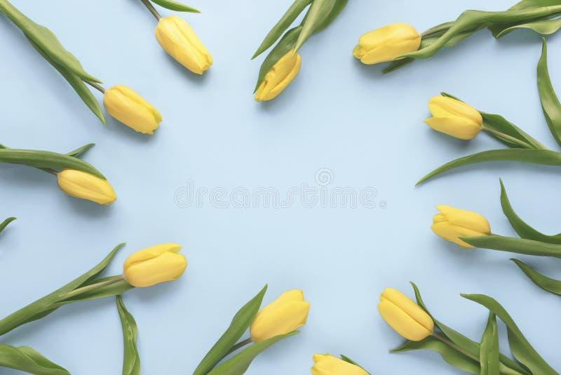 Piovuto appena sopra La pagina fatta del tulipano giallo fiorisce su fondo blu Disposizione piana, vista superiore Derisione flor fotografie stock libere da diritti