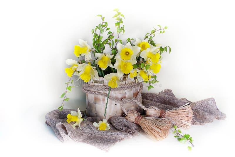 Piovuto appena sopra Narcisi gialli di natura morta in un canestro di vimini isolato su un fondo leggero immagini stock