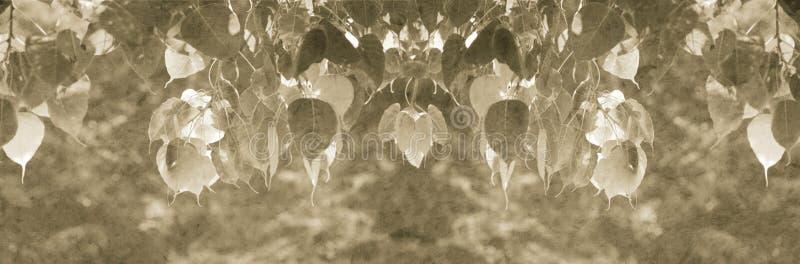 Pipal part avec la texture de papier de mûre pour le fond de barre de titre, sépia modifiée la tonalité images stock
