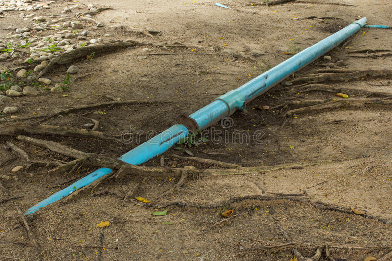 Pipe and root royalty free stock images