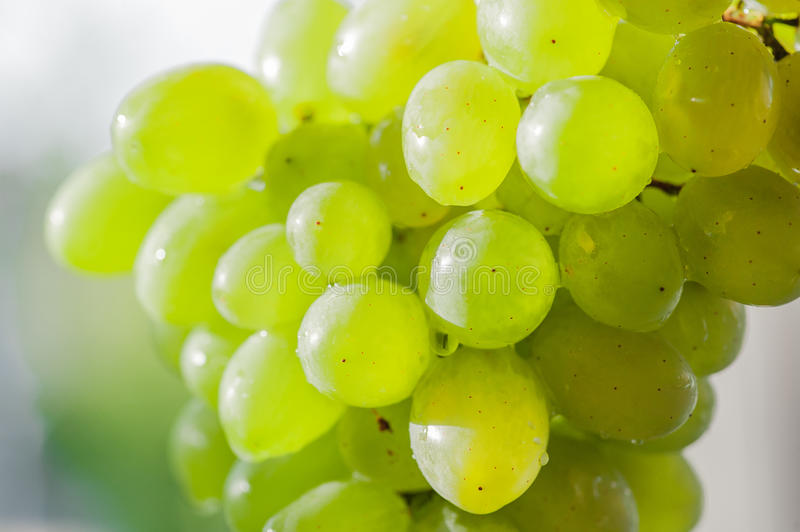Download Pipe white grape bunch stock image. Image of growing - 26014775