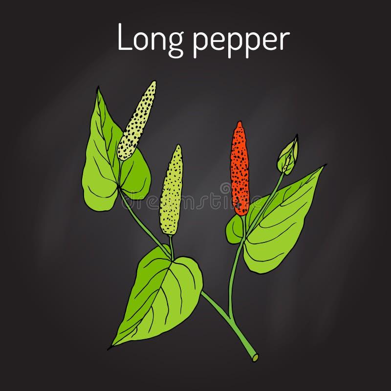 Piper longum del pepe lungo della pianta di Ayurvedic, pippali illustrazione di stock