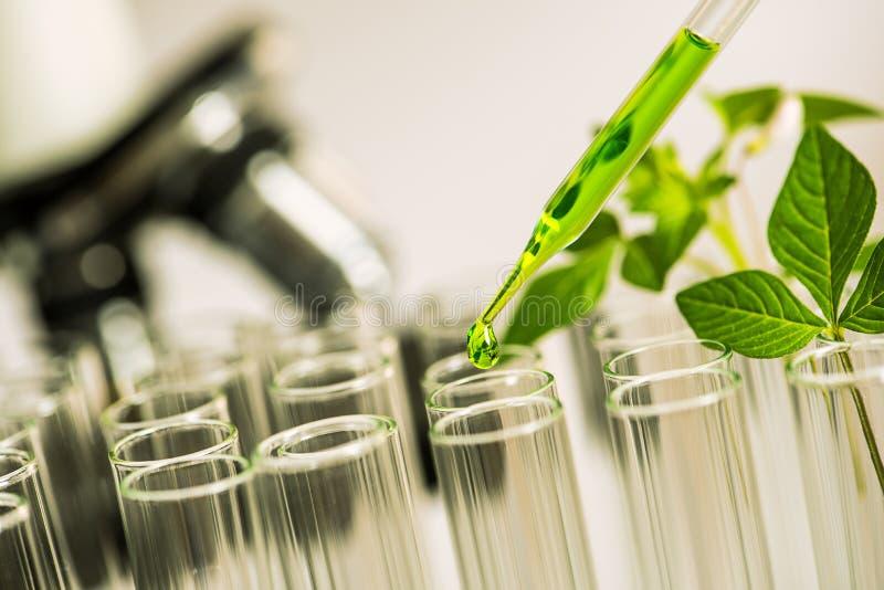 Pipeta sobre la sustancia química de caída de la muestra del tubo de ensayo en la hierba de la muestra imágenes de archivo libres de regalías
