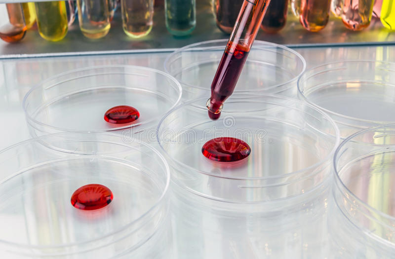 Pipette with drop of liquid and petri dishes royalty free stock images