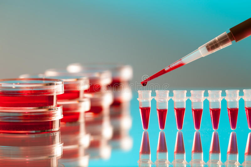 Pipette and petri dish royalty free stock images