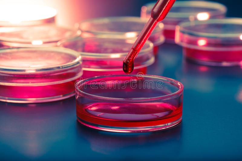 Pipette and petri dishes royalty free stock images