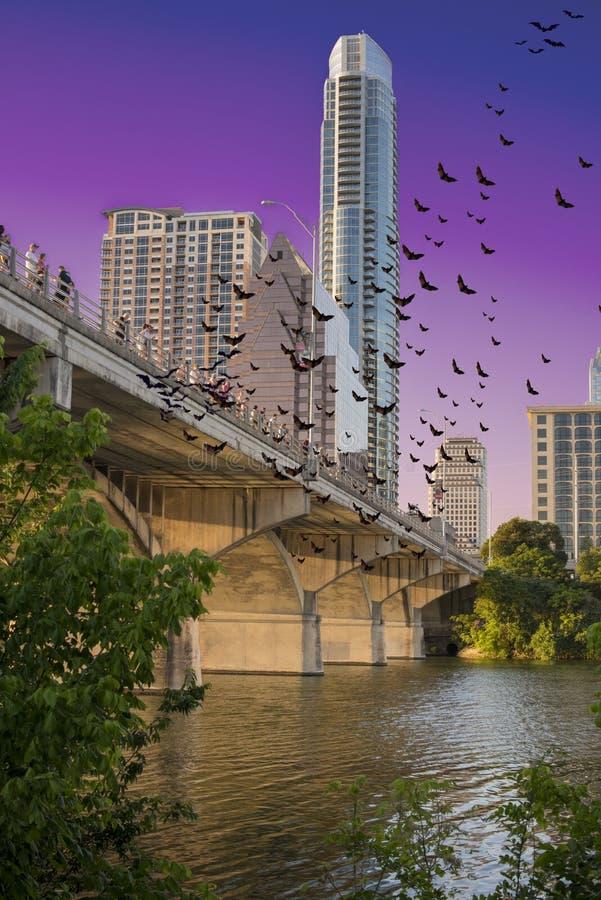 Pipistrelli sopra Austin immagini stock