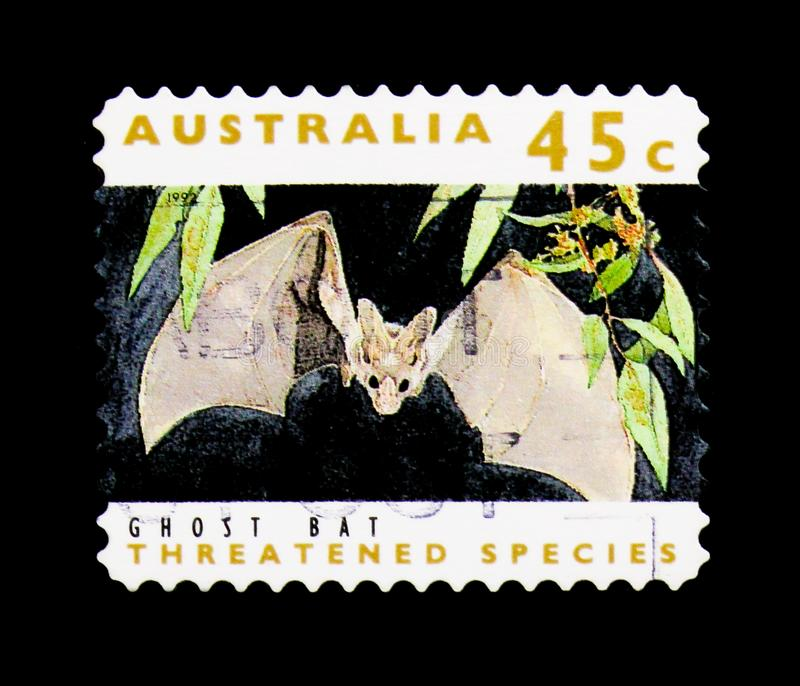 Pipistrello del fantasma (gigas) di Macroderma, serie minacciato di specie, circa 19 fotografia stock