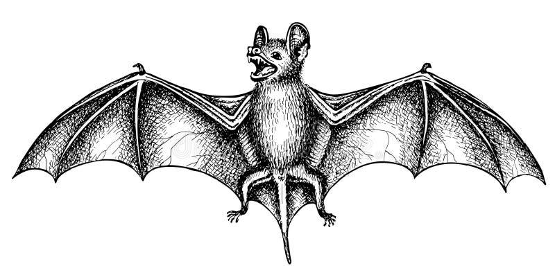 Pipistrello di grido illustrazione vettoriale