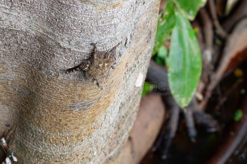 Pipistrello su un albero immagine stock libera da diritti