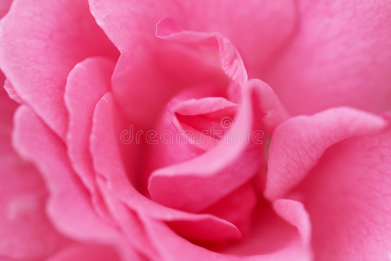 Pique cor-de-rosa foto de stock royalty free