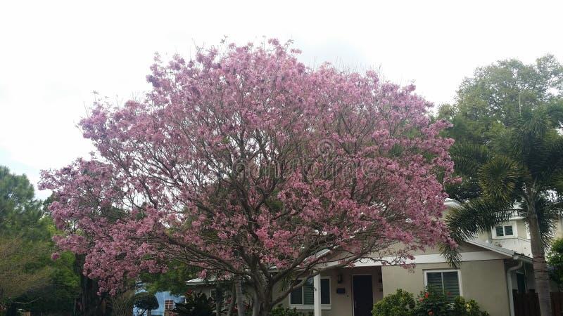 Pique el árbol de la flor foto de archivo libre de regalías