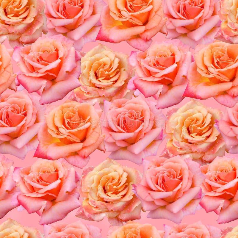 Pique el modelo inconsútil de las rosas foto de archivo libre de regalías