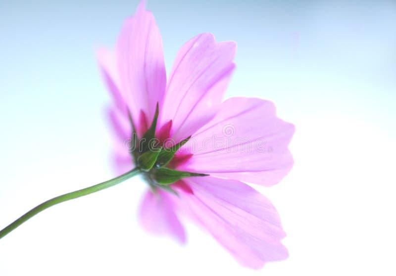 Pique a flor imagem de stock royalty free