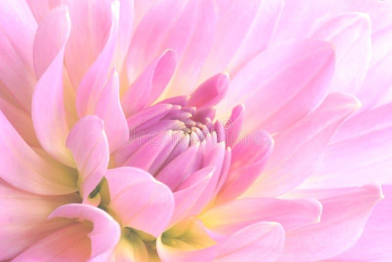 Pique a flor imagens de stock