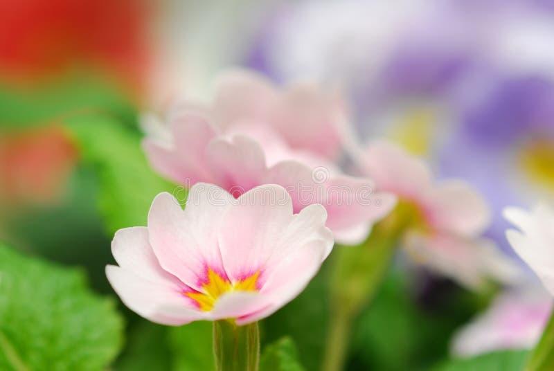 Pique a flor fotos de stock