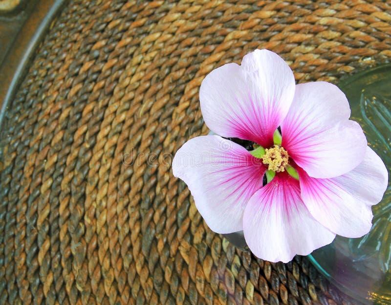 Pique a flor do hibiscus imagem de stock royalty free