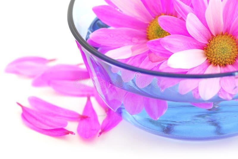 Pique flores fotografia de stock royalty free