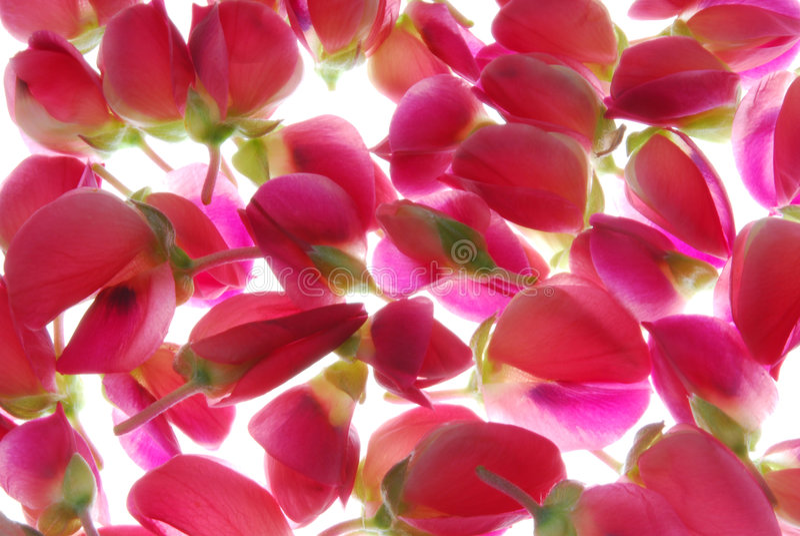 Pique flores em botão imagens de stock royalty free